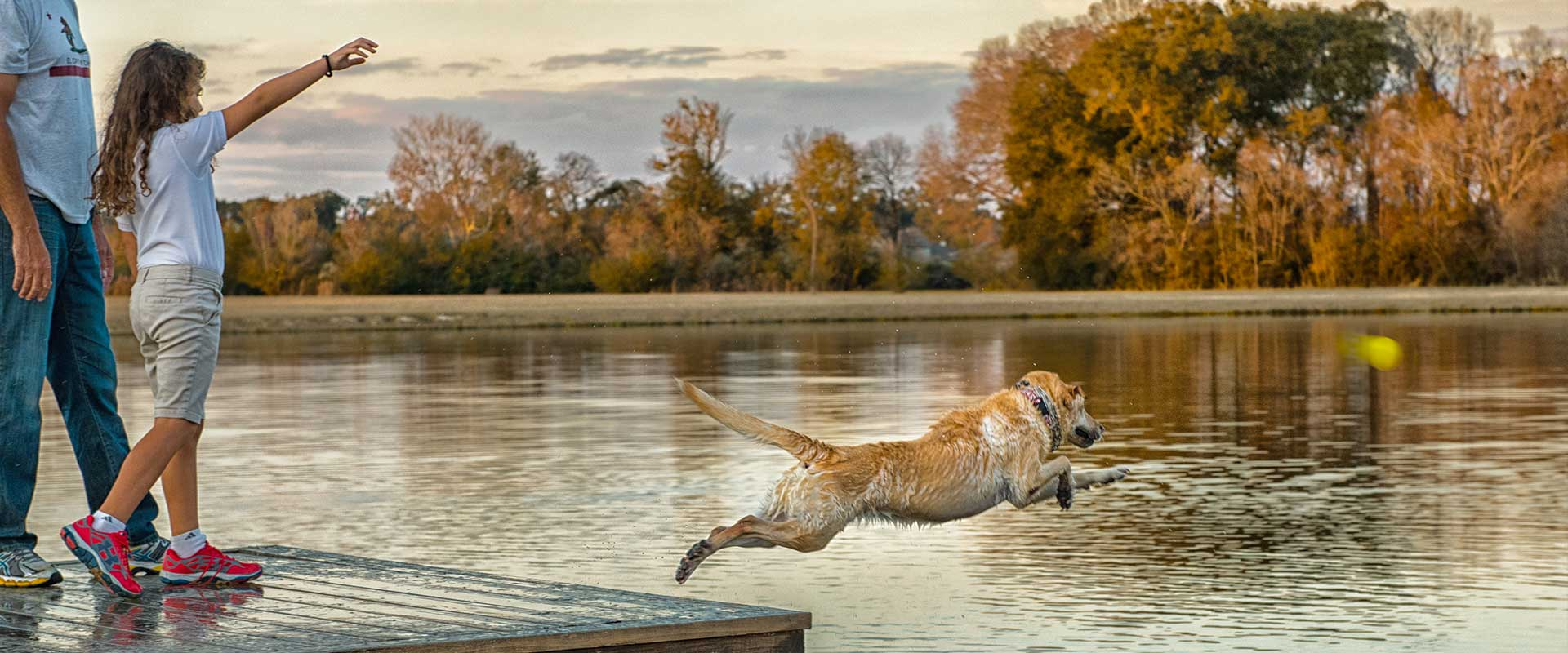 page image content dog pond